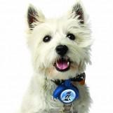 LeashLocket Intrekbare Hondenriem