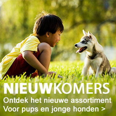 Nieuwkomers