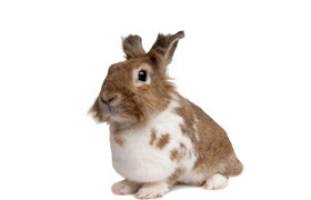 knaagdieren en konijnen